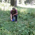 Wildverbissschutzmanschetten anbringen Waldschonung
