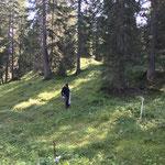 Schonungen abbauen, Spuller Wald