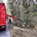 Forstarbeiten Zugertal...