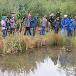 Das Feuchtbiotop, auch Teich genannt