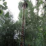 Die lange Leiter