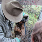 Nahaufnahme: Nest mit totem Sperling