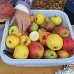 herrliche Früchte