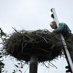 Klaus Hillerich beinahe im Nest