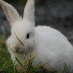 """Unsere """"Haustiere"""" Bunny White"""