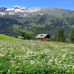 Schöne Alpwiesen