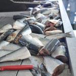 mhhh Köder für die Fische