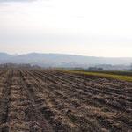 タカゾノの畑。ここ数年は小豆など豆を育てるとこが多いですが...2012年はジャガイモをそだててます。