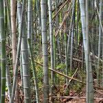 敷地内に竹林があります