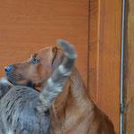 Dayo und sein Liebling Memphis