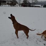 Schneeball fangen