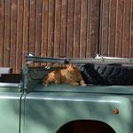 Amati in seinem Land Rover