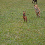 Flitze Hunde