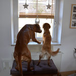 Zwei Hausmeister
