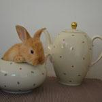 Teapot Bunny