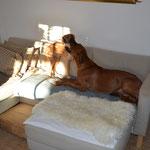 Sofakämpfe
