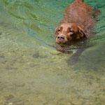 Schwimmlabi