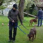 Training mit Hundegeschirr im Lernparcour Sandra mit Chels