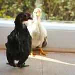 Bibo & Ritas offspring: black and white. :-)