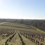 Les vignes à la Haie Fouasiere