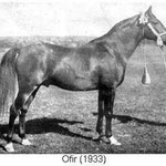 Ofir ox