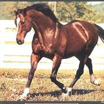 Northern Dancer xx