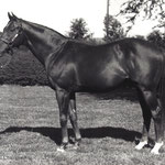Royal Charger xx v. Nearco