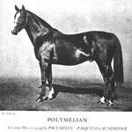 Polymelian xx