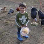 Timin beim Füttern des Ferdviehs
