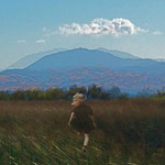 mAsis -  Good Life