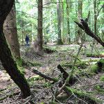 Der Wald bieten einen perfekten Lernort