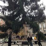 Der Weihnachtsbaum schwebt ein