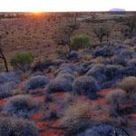 Uluru fron Kata Tjuta