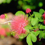 Botanical Gardens Darwin
