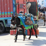 Gas Donkey