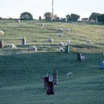 Oban (Stewart Island) Golf Course