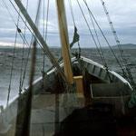 Ferry from Stewart Island