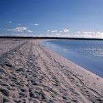 Beach of Mussel Shells