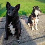 Jahresplanung 2018, Rückblick Tiju, Spiel mit Tierheimhunden