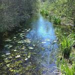 La rivière du Cauron à BRAS