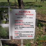 千葉市 青葉の森公園 ハンカチノキ木の説明