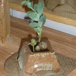 Pot grès cuisson four à bois et ses plantes et galets déco - Sylvie Ruiz -