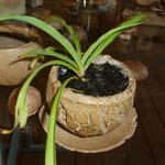 Pot grès cuisson four à bois et sa plante - Sylvie Ruiz -