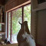 Sculptures Caco - Salle d'Expo-Vente de Bouquet de Flammes chez Caco et Sylvie -