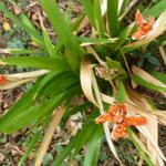 Au Jardin - Bouquet de Flammes -
