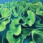 Koralle / Öl auf Leinwand / 100 x 100 cm 2019 (verkauft)