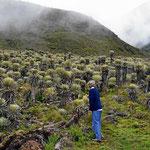 Die Landschaft ändert sich schlagartig, kakteenartige Gewächse anstelle eines Nebelwaldes.