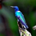 Und natürlich gibt es wieder Kolibris. Und natürlich muss ich wieder Fotos davon machen.