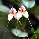 Orchideen im Orchideengarten.