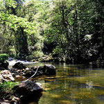 Der kleine Urwaldfluss unterhalb des Wasserfalls.